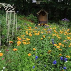 花に癒される夏 -2-