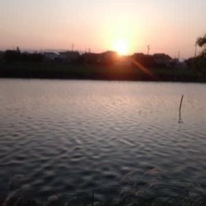 夕陽と植物の写真