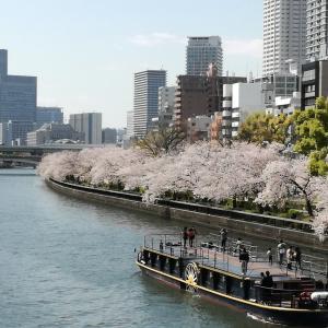 橋の上から桜を眺め「さくら」を聴いた。
