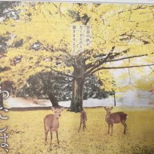 私は、奈良派。奈良の秋が、たくさんの人に届きますように。