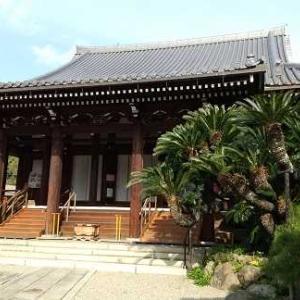 樹齢約300年のソテツ 巨樹 奈良 淨教寺