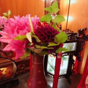 お花いただきました。