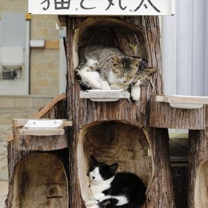 マルタと猫