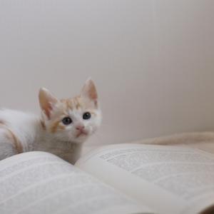 ◆夏の読書