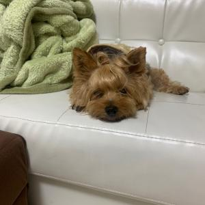 犬の病気 膀胱炎
