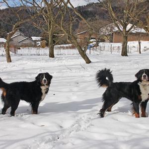 お正月は雪にまみれて