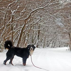雪降り過ぎて困ってしまう