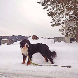 雪の中の散歩に注意