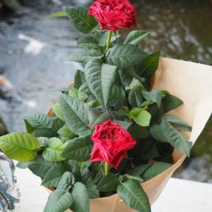 インフィニティローズや可愛いお花の苗を頂きました~^^ 愛してやまない薔薇、ガブリエルとみさき