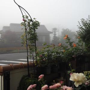 霧の朝 プリプリの桃まん「シャルム」