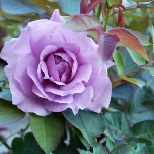 巨大なキャンパスの下で薔薇を育てる私 みやこ、クロッシェ、リパブリック・ドゥ・モンマルトル