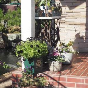 玄関ポーチのお花を入れ替え 可愛い黄色い薔薇 レモンフィズとザ・ピルグリム