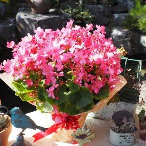 プレゼントのお花♡ 季節の行事と、薔薇の行事 可愛い妖精ニンファ