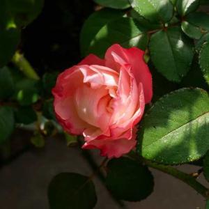 イノシシのせいで庭づくりを諦めかけたことも・・・ アブラハム・ダービーと、グラスやベロニカ シャルムとル・シエル・ブルー