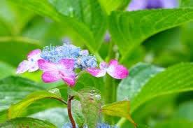 花祭り(お釈迦様の誕生日)