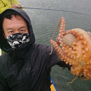 東京湾マダコ釣行記@渡辺釣船店