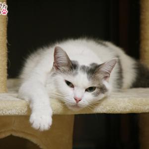 今更、猫の熱中症対策どうしてますか