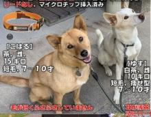 【 #迷い犬 】捜しています #倉敷