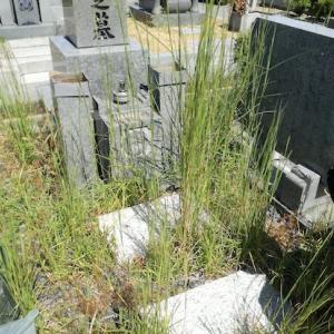 昨日、お墓の掃除に行きました。