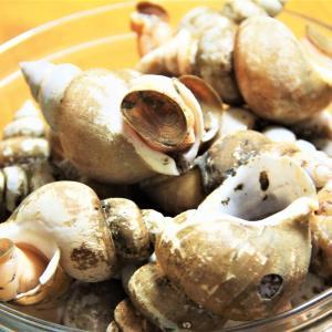 日本海の海の幸『バイ貝の煮付け』 料理研究家 指宿さゆり