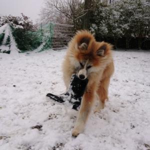 ゆきー!  雪ー!