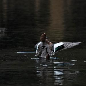 第3902篇:セカンド・ライフで始める「野鳥撮影」(15)