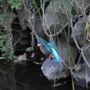 第3957篇:セカンド・ライフで始める「野鳥撮影」(69)