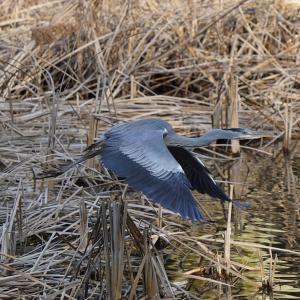 第3997篇:セカンド・ライフで始める「野鳥撮影」(109)