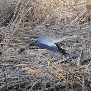 第3998篇:セカンド・ライフで始める「野鳥撮影」(110)