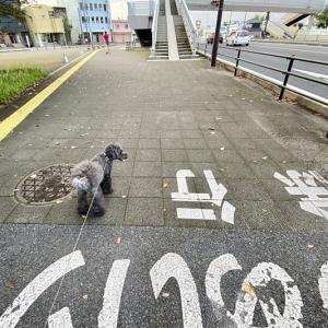 ☆ 202010 ガレージライフ ハイエース キャンピングトランポ 荷室マット ☆