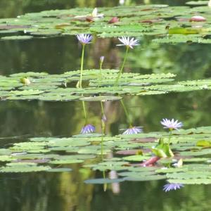 モネの庭in北川村①