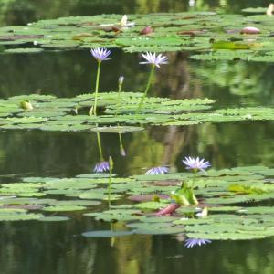 北川村のモネの庭