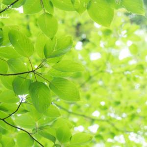 森の光と静かな音が聴こえてくる・・・やさしい光を纏った花たち「優しさに溢れた企画」