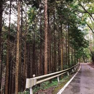 岡山で松茸狩り人になります!