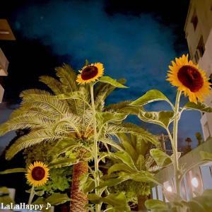 iPhone12で撮った日常の夜景