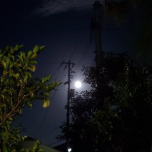 花火の音と、満月1日前✨