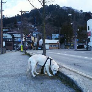 雪のない会津の散歩道💦と鷽鳥信じてます💛