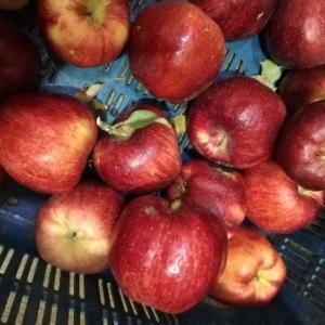 美味しくない大量のりんご