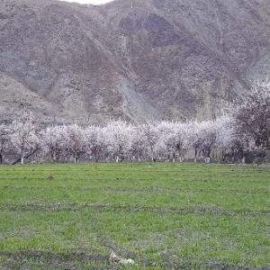 お花見情報 4月17日のタクマチック村