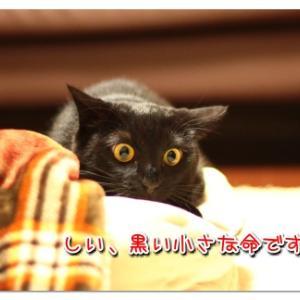 黒い小さな命 -ハロウィンに考えてほしいこと-