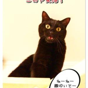 ドМなオバサンに 猫パンチを~