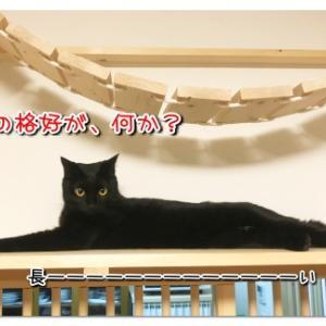 ダックスと猫、どっちが長い?