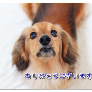 祝!ブログ開設10周年 ~私のブログ人生~