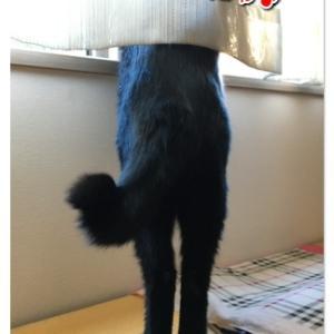 なんともマヌケな短足ちゃん