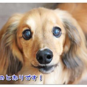 イイコじゃない犬の歯磨き 【動画】