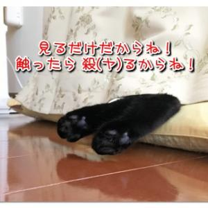 クーラー好きの悩殺ポーズ