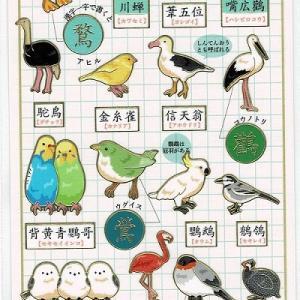 開店10周年おめでとう特別企画、鳥さん漢字表記、Cody the Lovebirdセール
