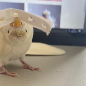 ちょっとホラーなしろちゃん & お客様の鳥さん