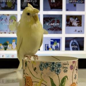 小鳥雑貨 委託販売してくださる作家さんの募集