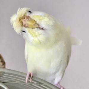 パワーアップしたしろちゃん & 小鳥のマスキングテープ